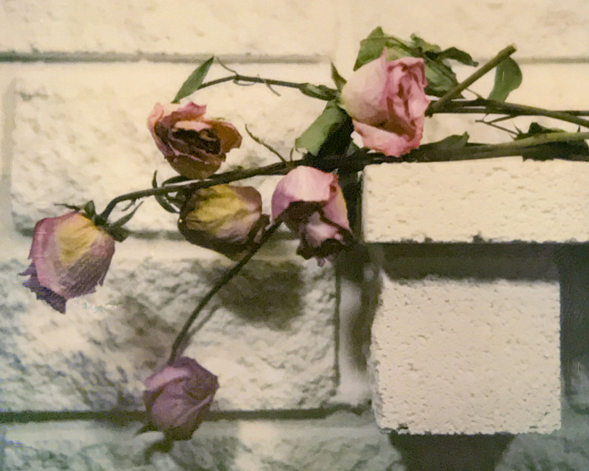 Dried Roses and Bricks – SX-70