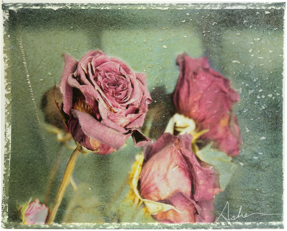Dried Roses in Window